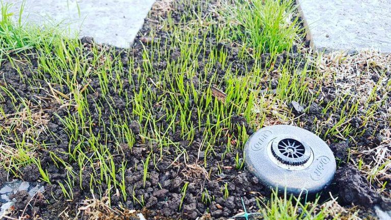 jardinería araucanía